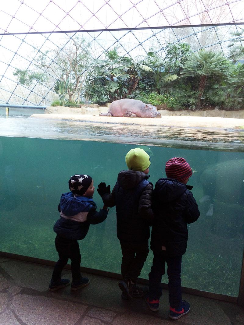zoo_hauptstadtmutti_03