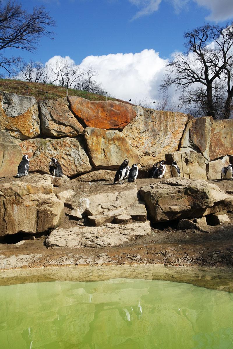 zoo_hauptstadtmutti_15