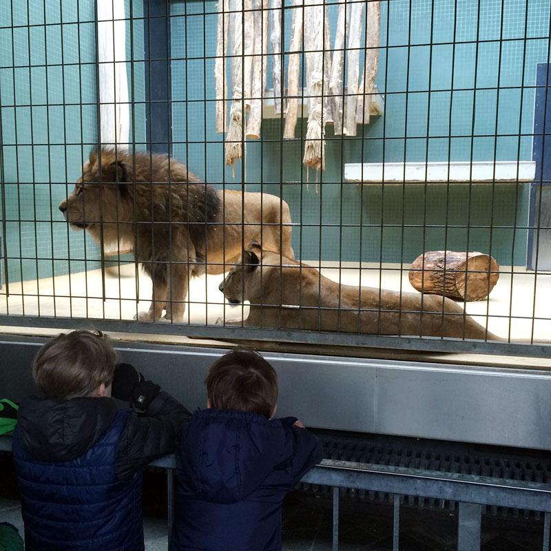zoo_hauptstadtmutti_16
